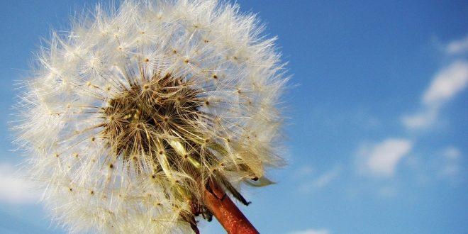 remedio herbal acne